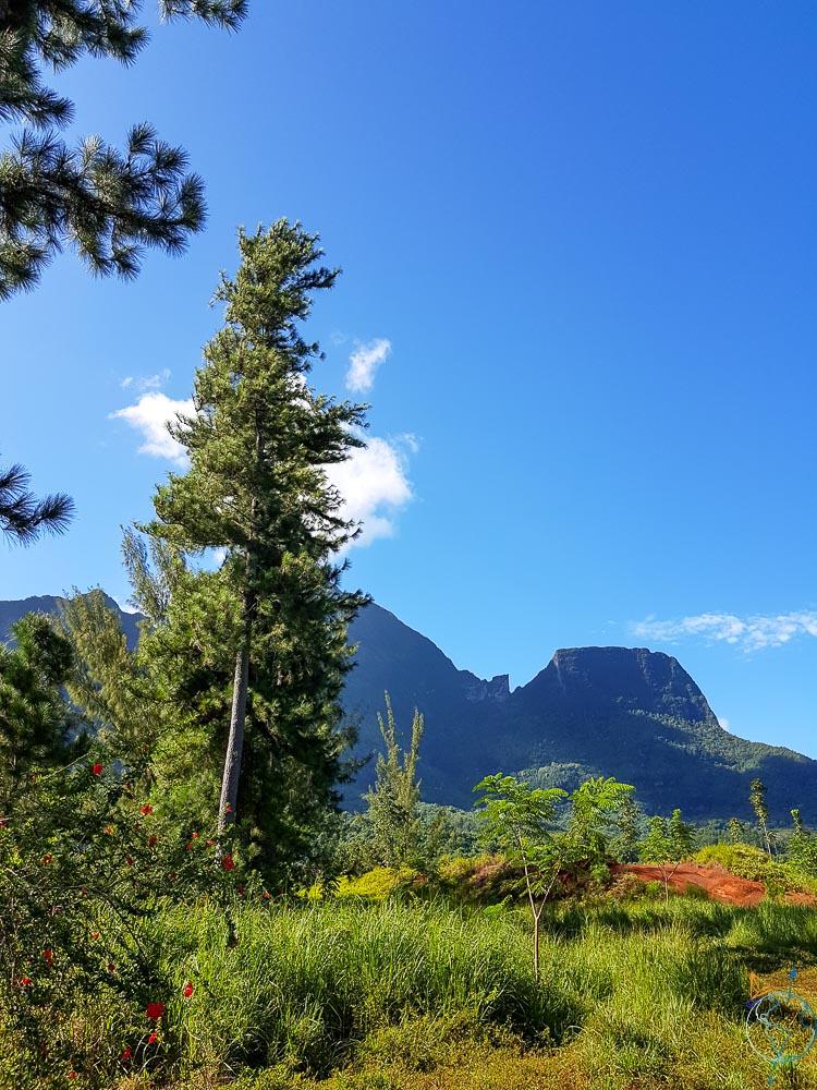 Randonnée en plein coeur de la nature de Moorea.