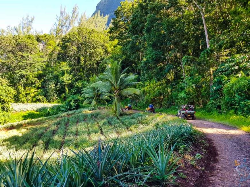 Quads en excursion à Moorea, autour du mont Rotui.