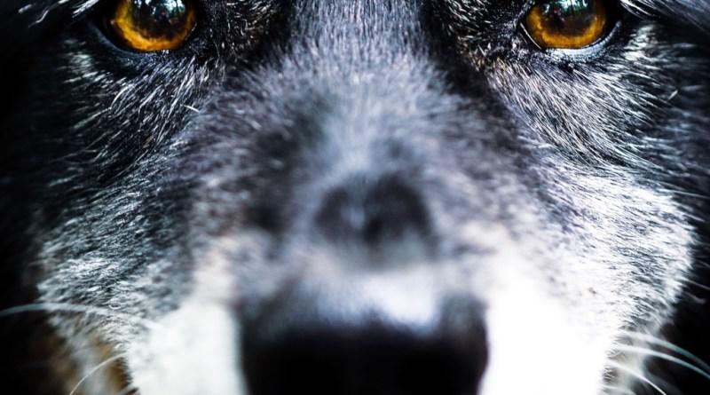 Saffy's eyes