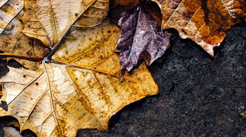 Three colorful leaves
