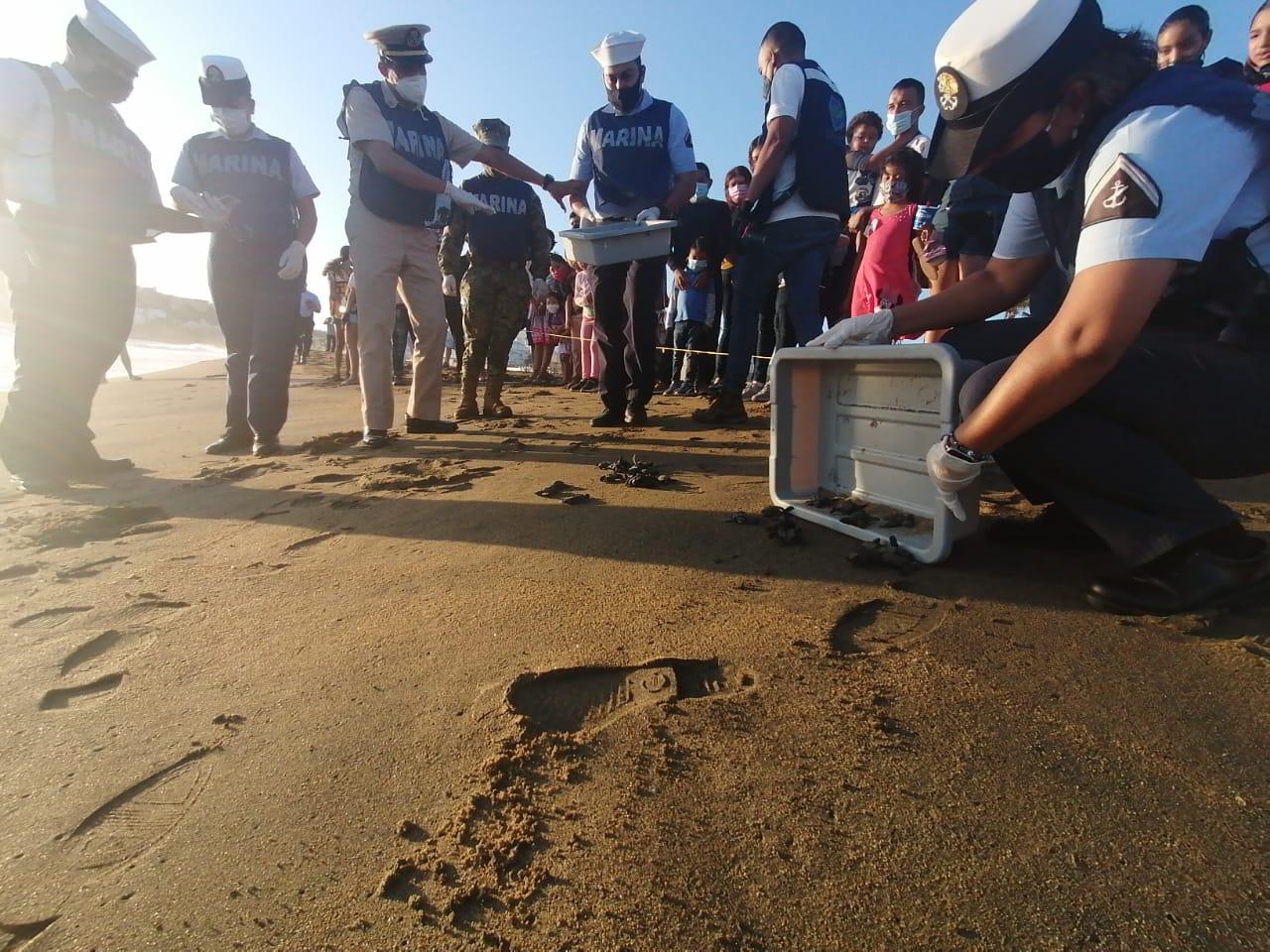 SEMAR apoya en liberación de crías de tortugas marinas en Manzanillo