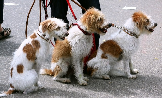 dogs-91689_1280