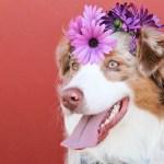 Transporte de Pet em carro – O que fazer?