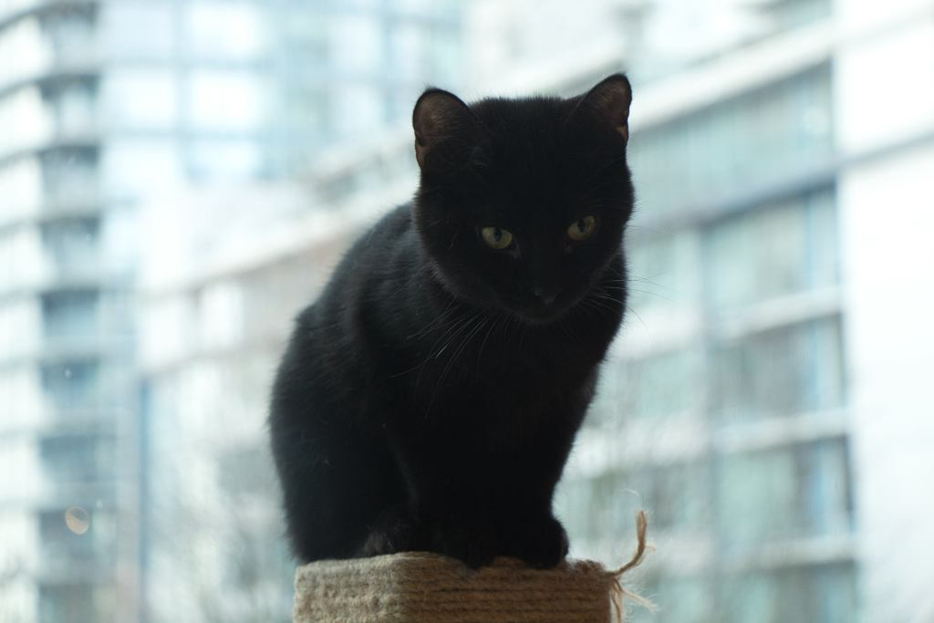 a small black cat is sitting on a scratching post