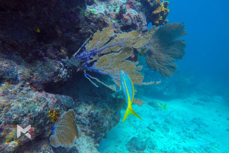 Mergulho no Molasses Reef