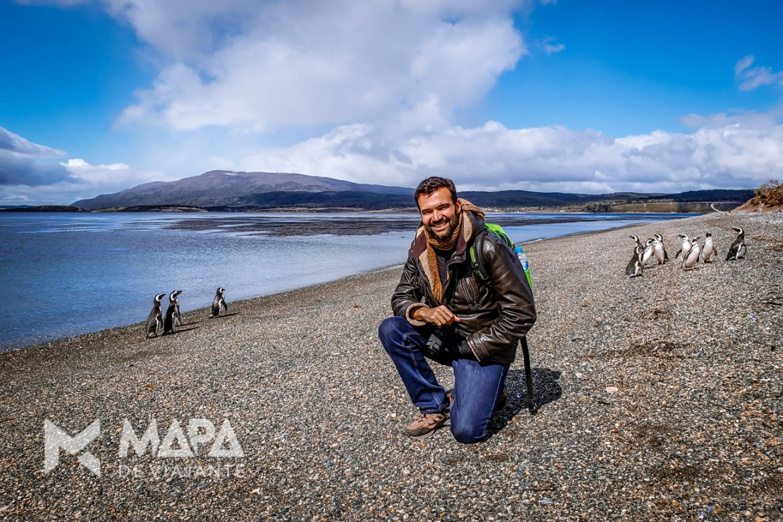 Pinguins Magalhães na Ilha Martillo!