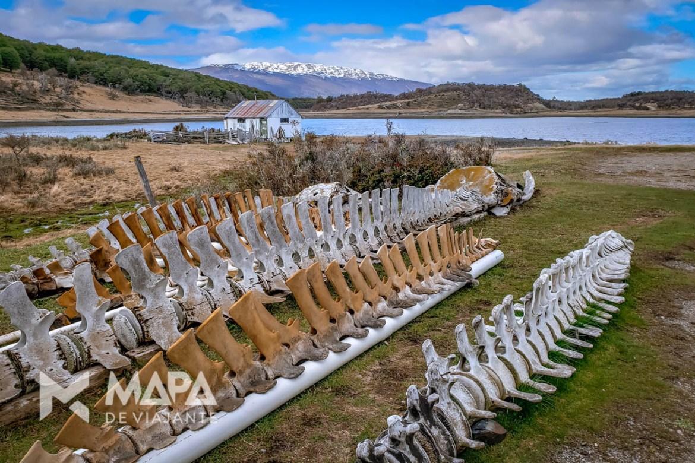 Carcaças de baleias na área externa do Museu Acátushun
