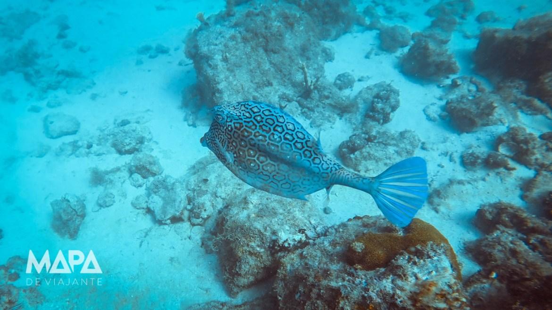 Vida marinha em Arraial do Cabo