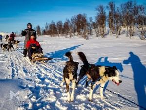 Passeio de Dogsledding Trenó com Rusky em Tromso Noruega