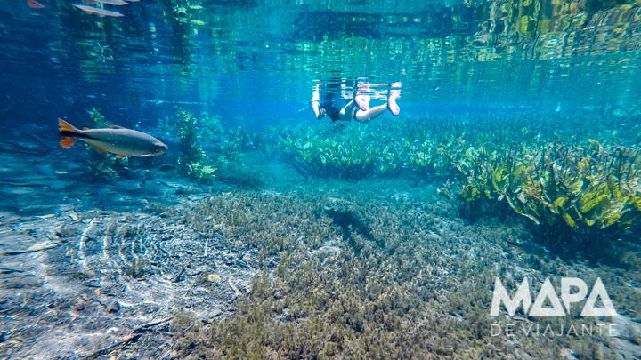 Dicas de Bonito: Aquário Natural em Bonito / MS
