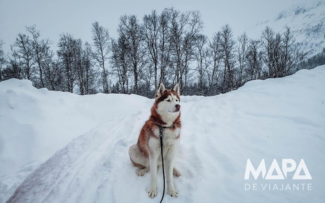 O que fazer em Tromso Noruega