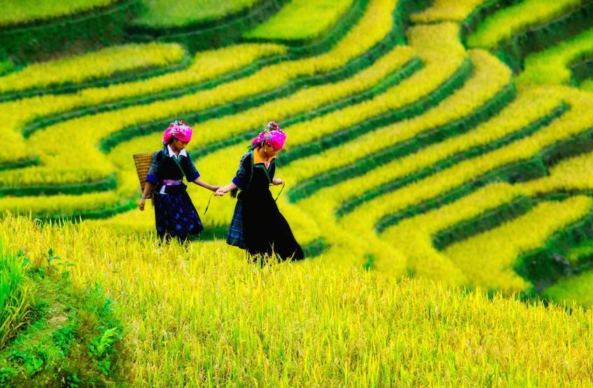 Saffron Interview Sapa, Vietnam by Cristal Tran 847px