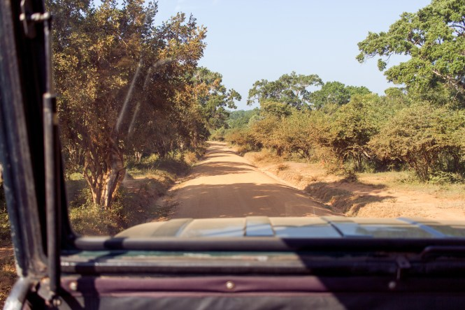 Yala National Park