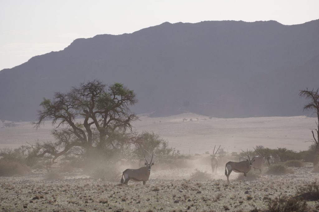 Namibian Road Trip Oryx