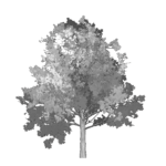 Tree Icon 150