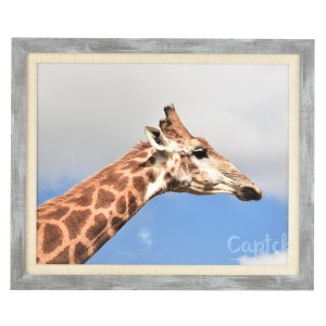 Francesca canvas grey wood frame