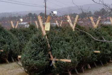 Nothing Says Christmas Like A Real Tree