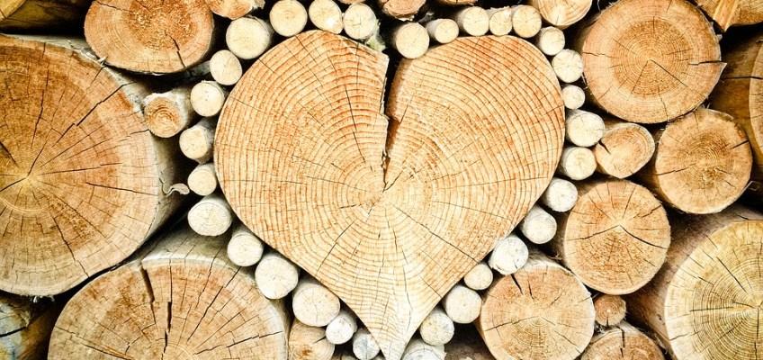 Firewood: Buy it Where you Burn It
