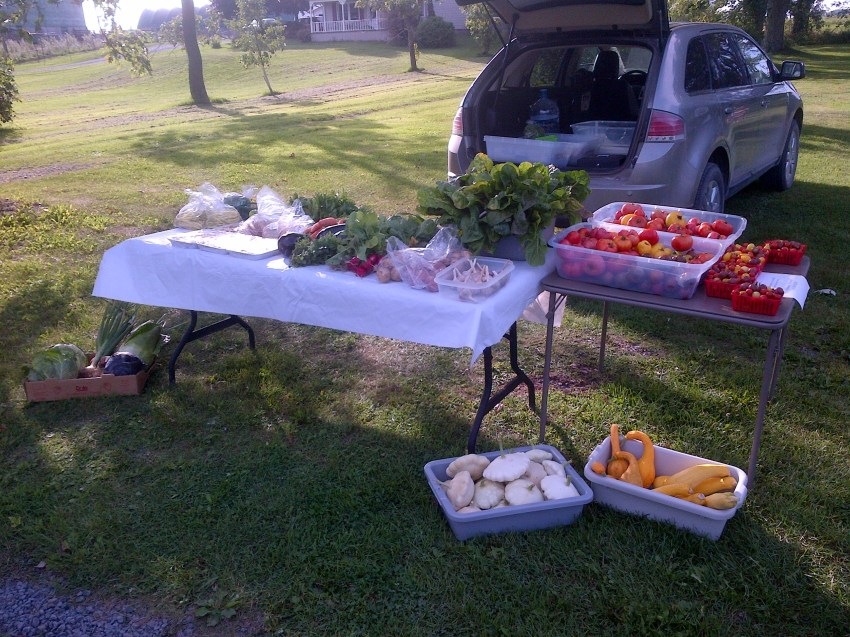 August 30th Market Stand