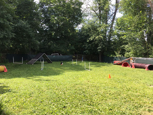 Yard set up with agility obstacles