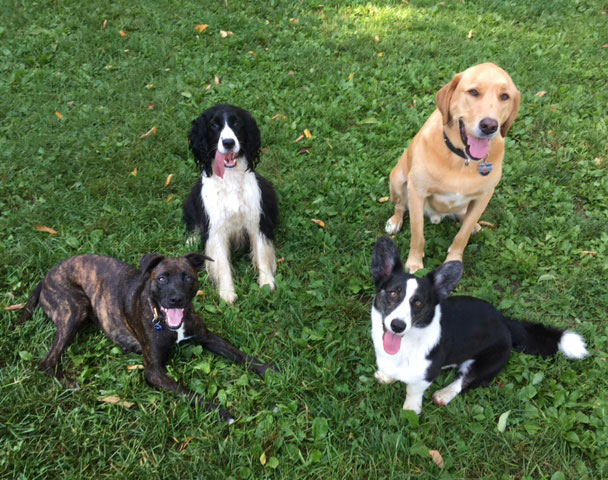 Four happy dogs sitting together in the grass