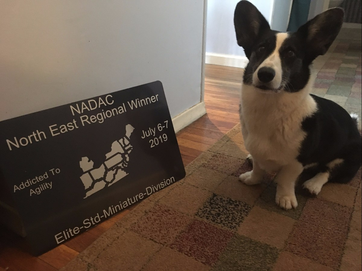 corgi sitting next to a plaque that reads Nadac northeast regional winner