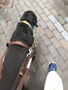 black retriever guide dog leading his handler down a brick sidewalk