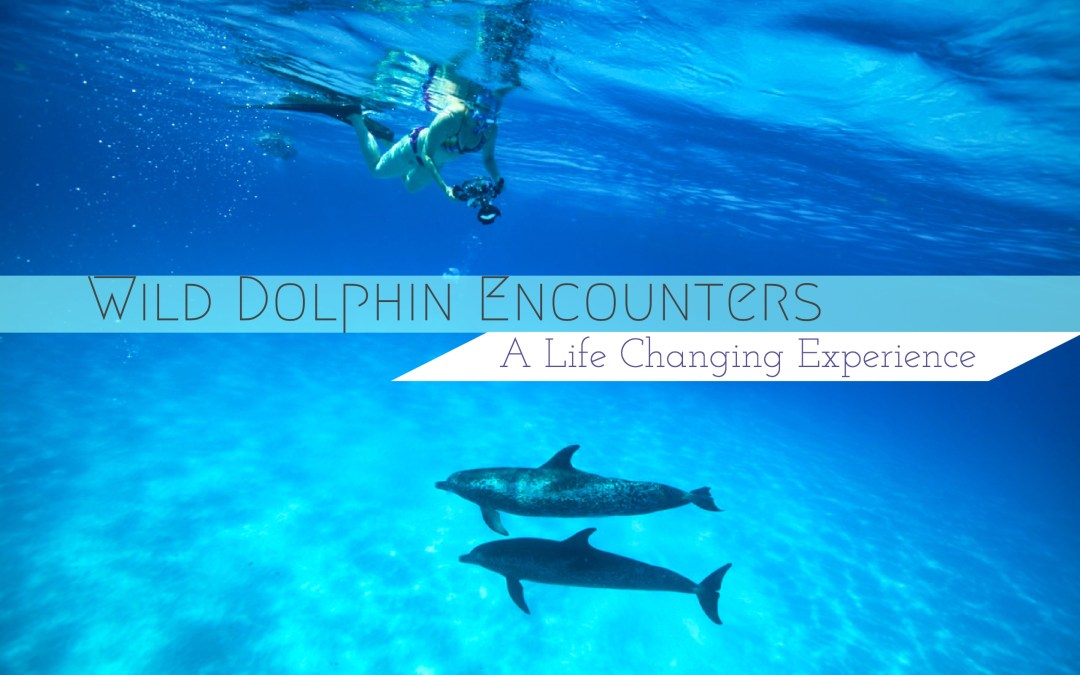 Wild Dolphin Encounters: A Life Changing Experience