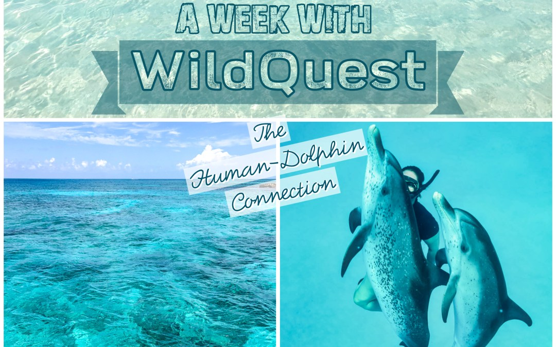 A Week with Wildquest: The Human-Dolphin Connection