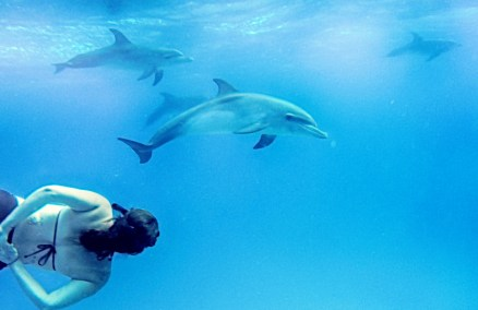 me and dolphin 2