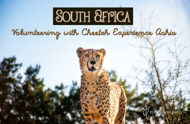 South Africa: Volunteering with Cheetah Experience Ashia
