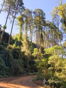 Lovely forest