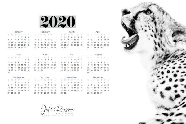 2020 Wallpaper Noah