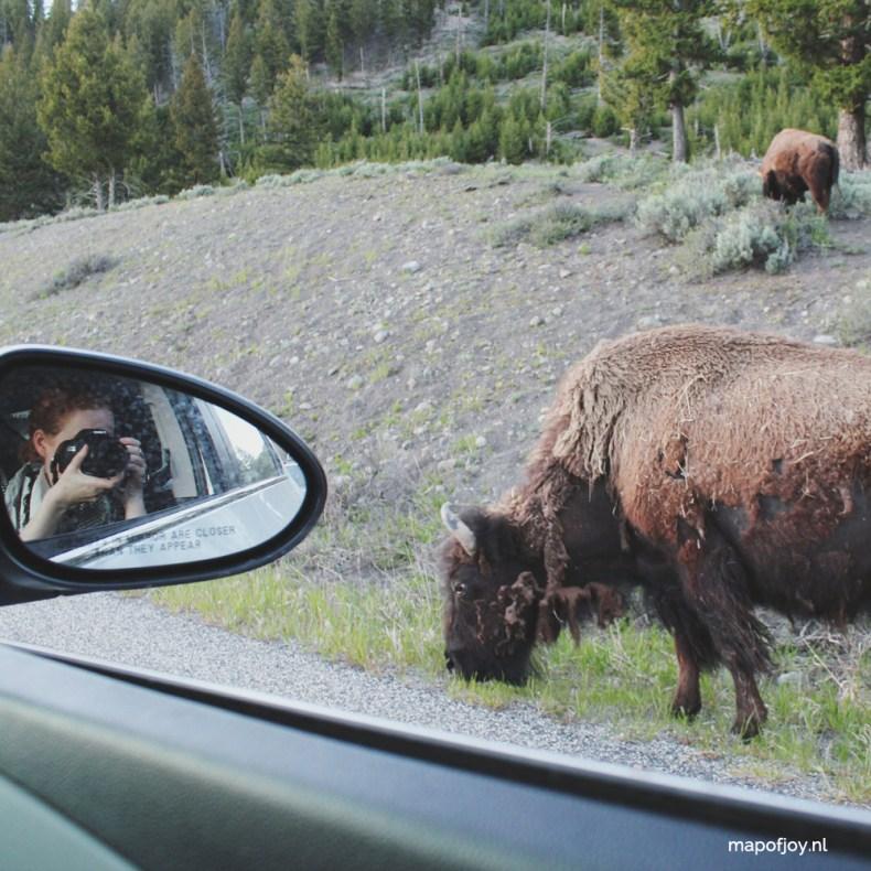 Bizon in Yellowstone, Lamar Valley, Amerika - Map of Joy