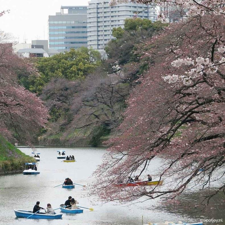 Chidoriga-Fuchi, cherry blossom tree, Tokyo, Japan - Map of Joy