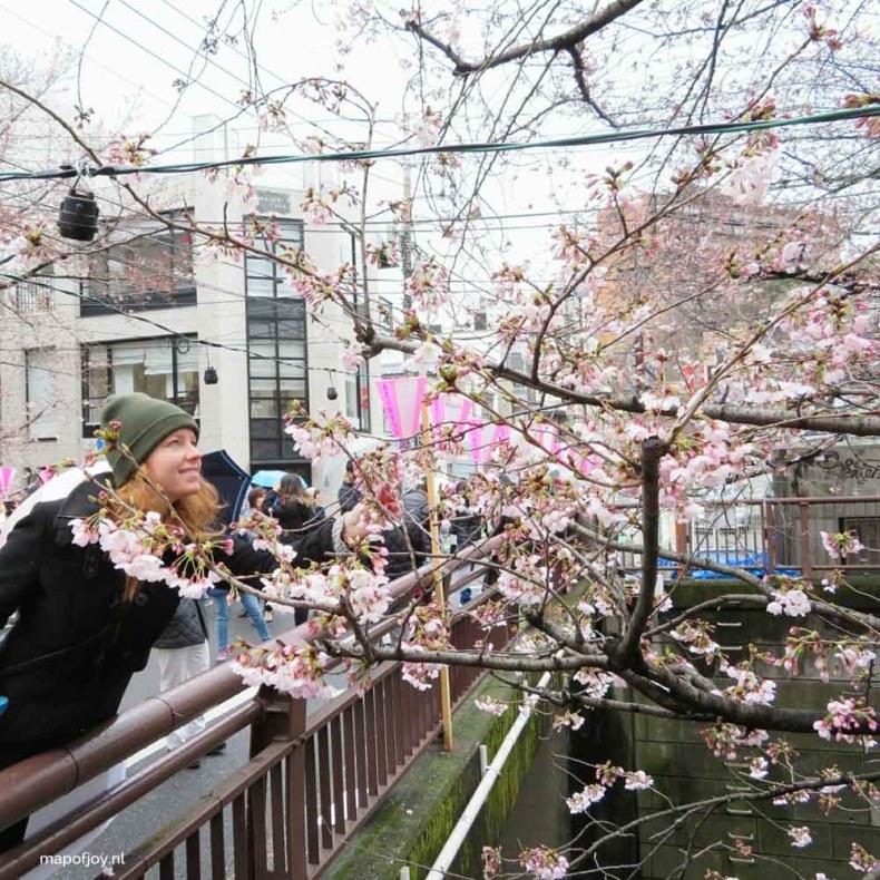 Naka Meguro, cherry blossom tree, Tokyo, Japan - Map of Joy