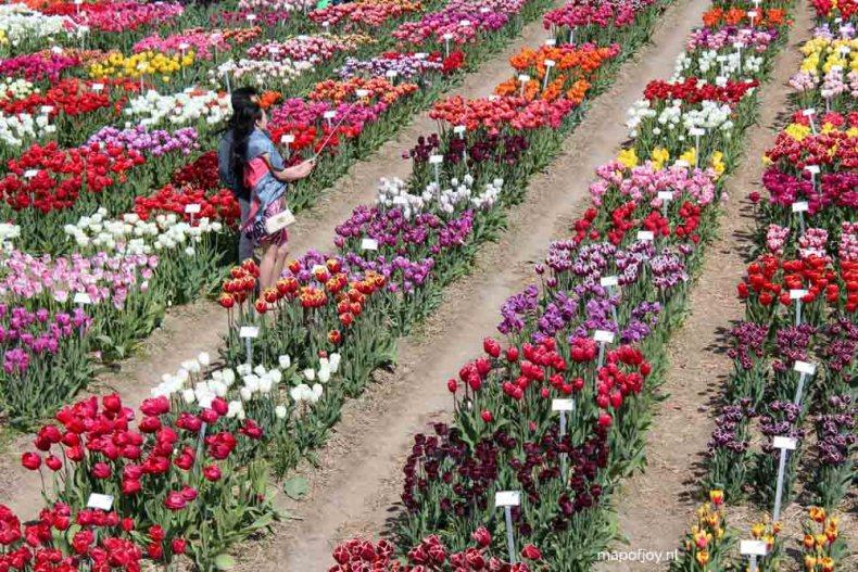 Tulpenfestival, Flevoland, Holland - Map of Joy