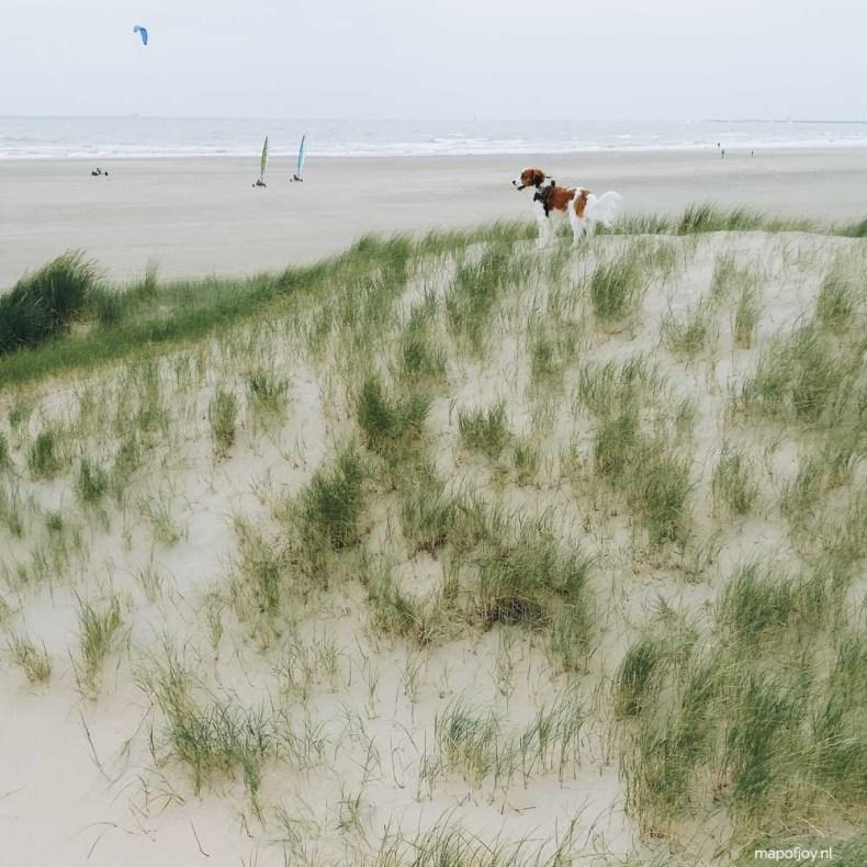 IJmuiden hondenstrand - Map of Joy