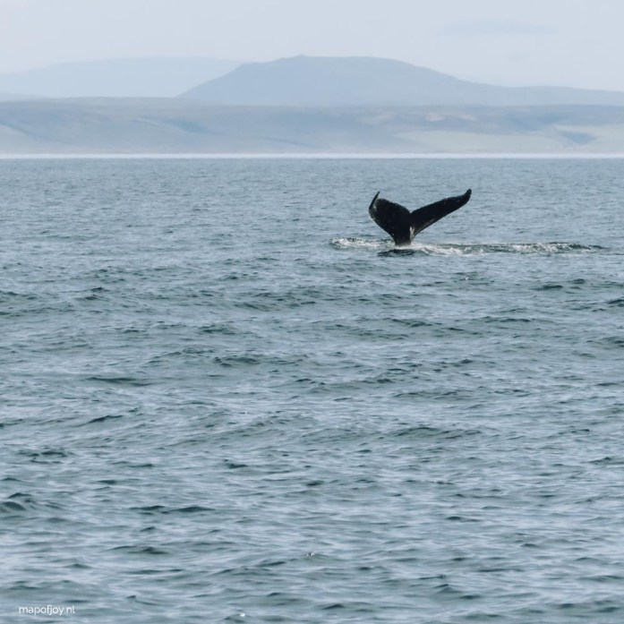 Whale watching Husavik, Iceland - Map of Joy