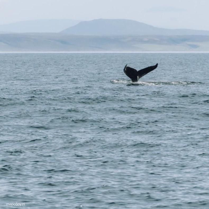Whale watching Husavik, Iceland - Map of Joy