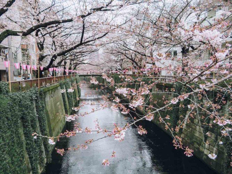 Meguro Rivier, beste plek om kersenbloesems te zien in Tokio - Map of Joy