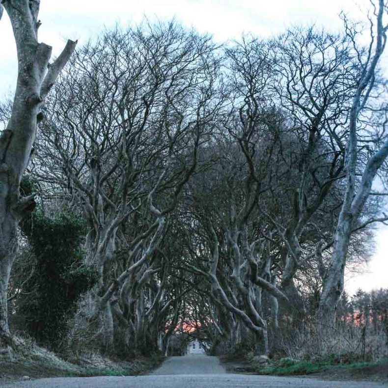 The Dark Hedges, Noord-Ierland - Map of Joy
