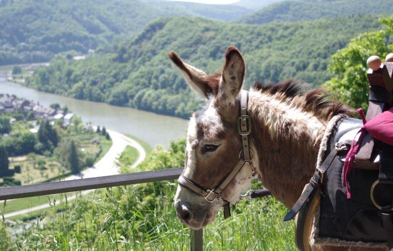 Wandelen met een ezel in de Franse Ardennen - Map of Joy