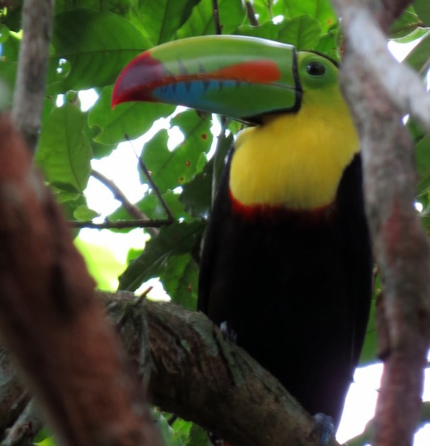 Spotted: Toucan.