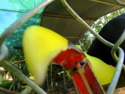 The time a toucan tried to eat our camera!
