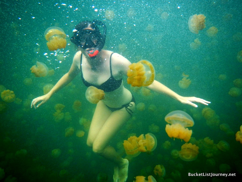 Take the plunge! Snorkelling at Jellyfish Lake.