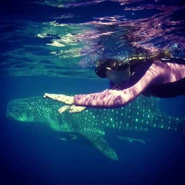 Swimming with an 18 foot whale shark