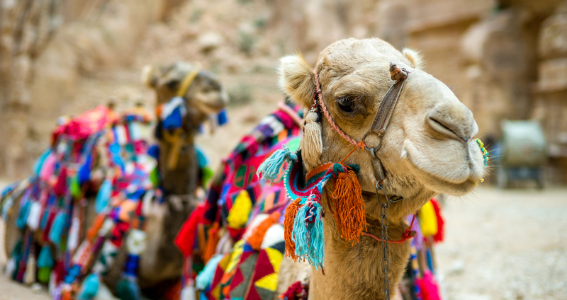 Follow in the footsteps of Lawrence of Arabia riding camels through the Wadi Rum, stopping in a lush oasis to pop the question.