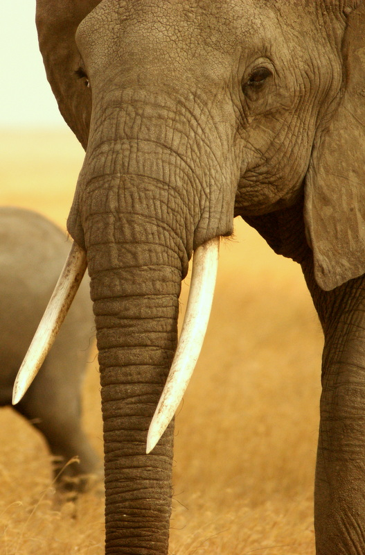 The huge elephant herds numbering well over 40000 are one of the main attractions here.