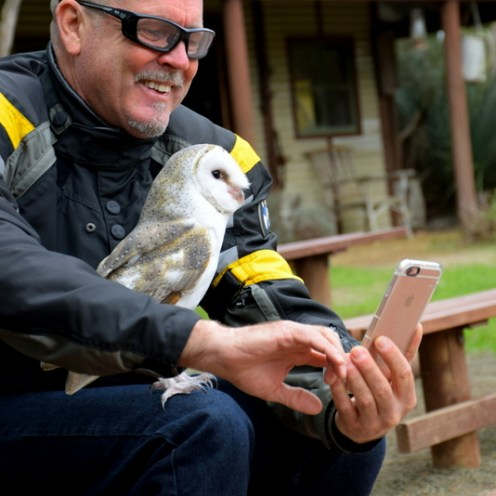 Each bird shows off their incredible aerial skill, and then happily lands on your arm or lap as you pet them or hold them on a glove.